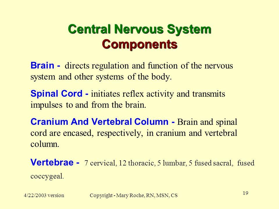 Central Nervous System Components