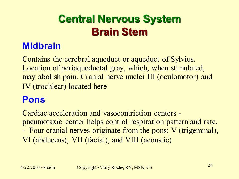 Central Nervous System Brain Stem