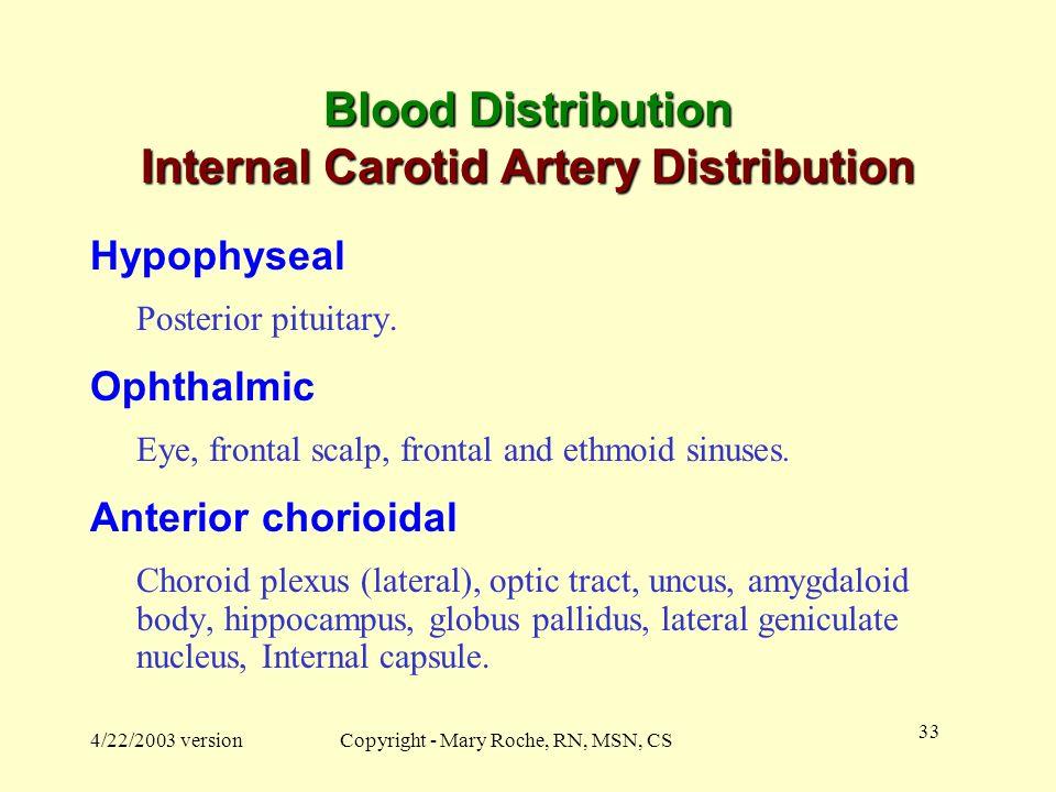 Blood Distribution Internal Carotid Artery Distribution