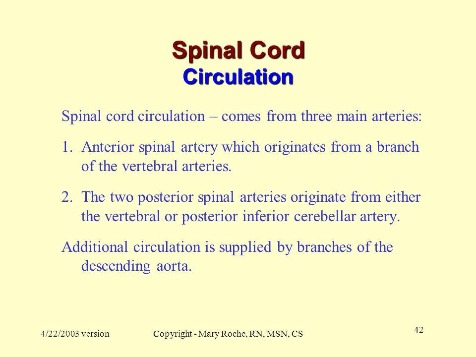Spinal Cord Circulation