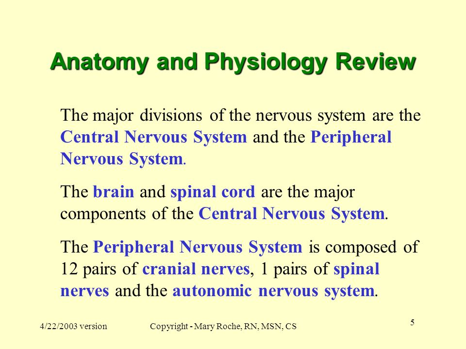 spinal cord spinal nerves and the autonomic nervous system review sheet 21 This lecture examines the anatomy and functions of the spinal cord we review the reflex arc nervous system—autonomic nervous system and cranial nerves 21.
