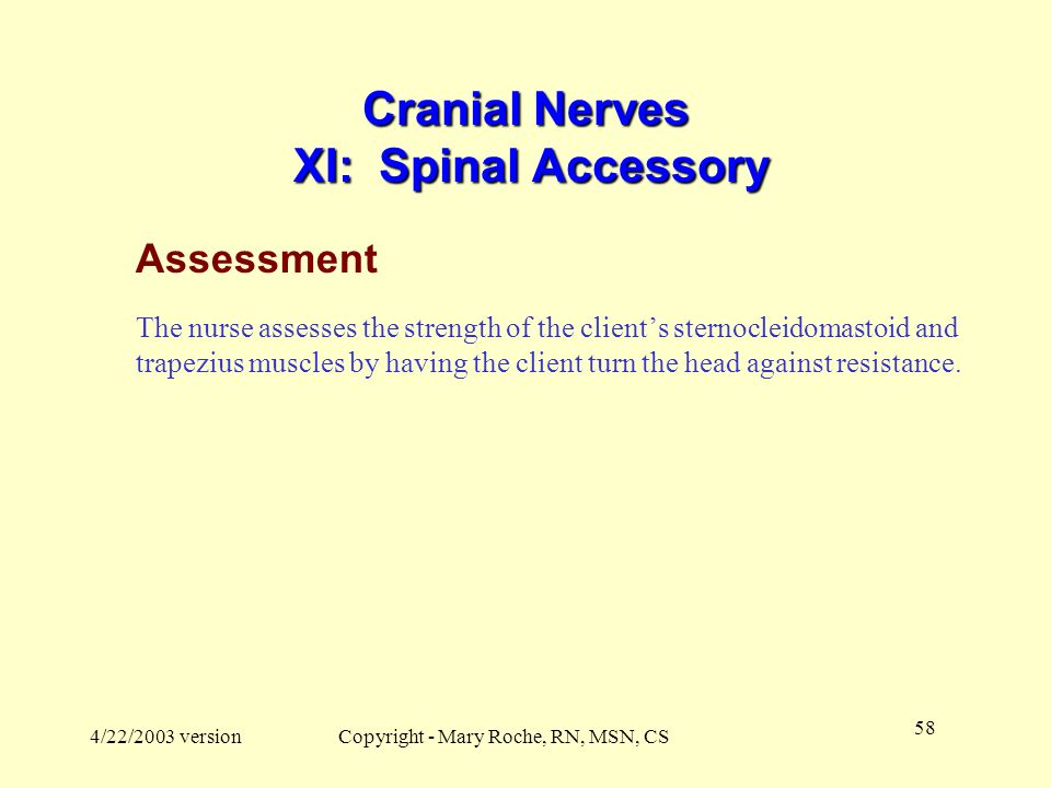 Cranial Nerves XI: Spinal Accessory