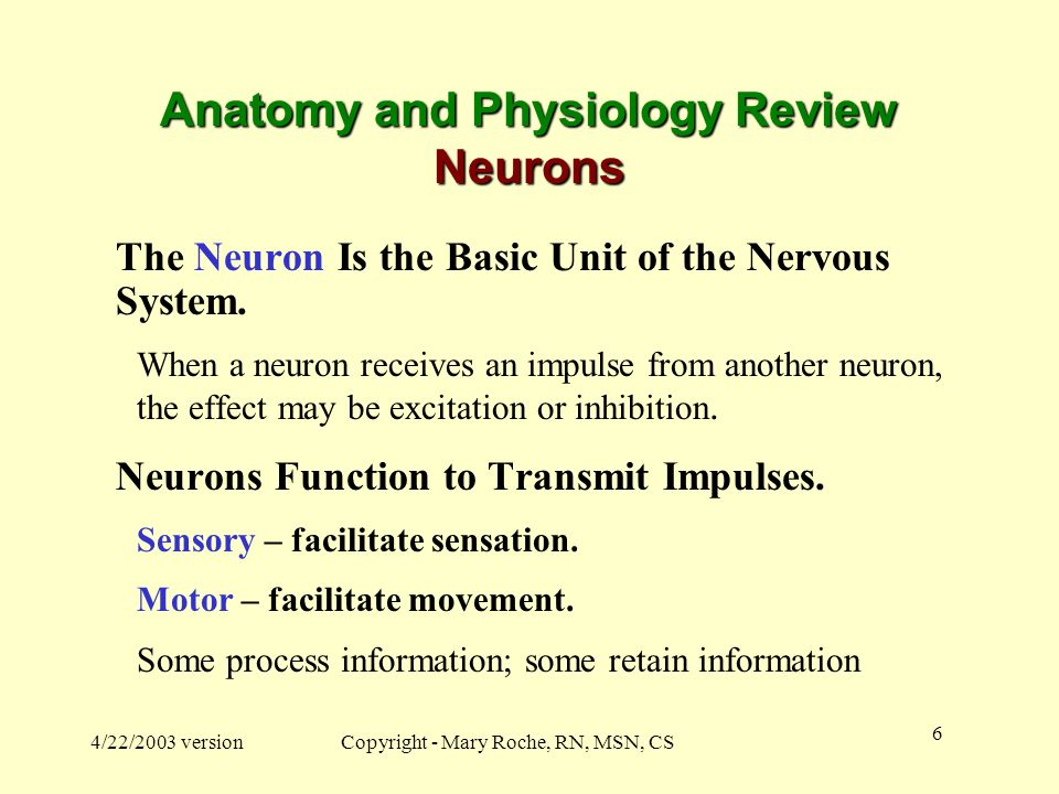 Anatomy and Physiology Review Neurons