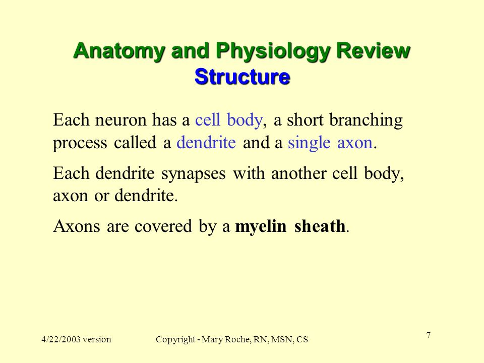Anatomy and Physiology Review Structure