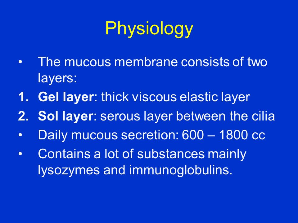Physiology The mucous membrane consists of two layers: