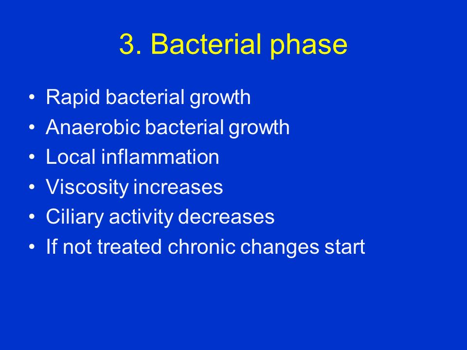 3. Bacterial phase Rapid bacterial growth Anaerobic bacterial growth