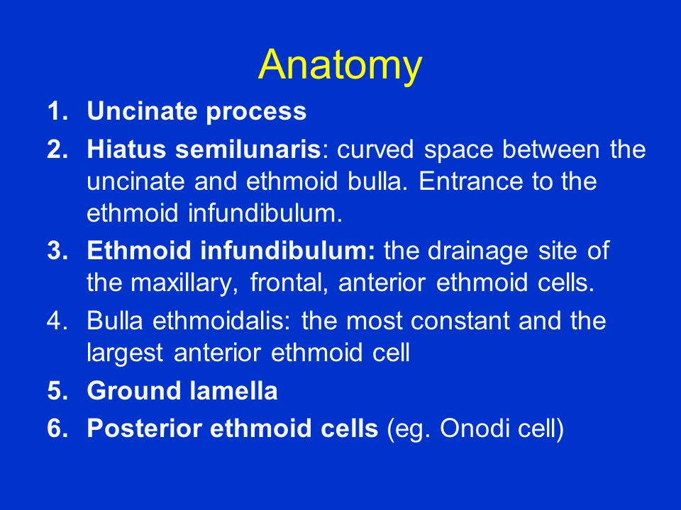 Anatomy Uncinate process