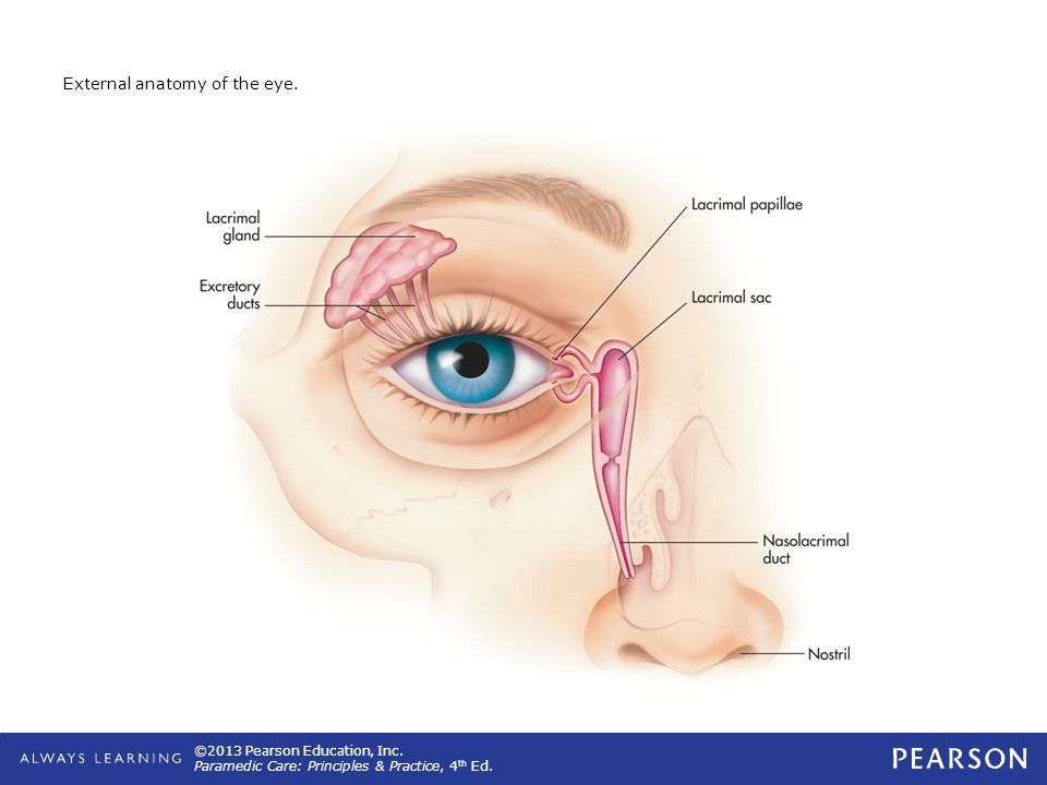 External Anatomy Of Eye Gallery Human Body Anatomy