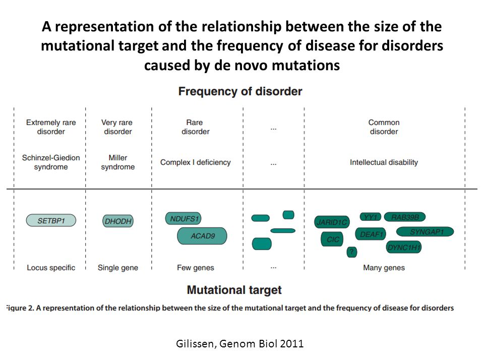 A representation of the relationship between the size of the mutational target and the frequency of disease for disorders caused by de novo mutations