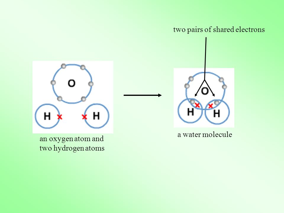 two pairs of shared electrons
