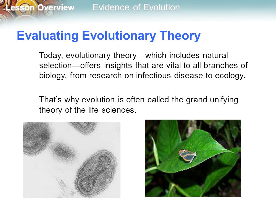 an overview of the theory of evolution Overview of sociobiology theory share  charles darwin's theory of evolution by natural selection explains that traits less adapted to particular conditions of.