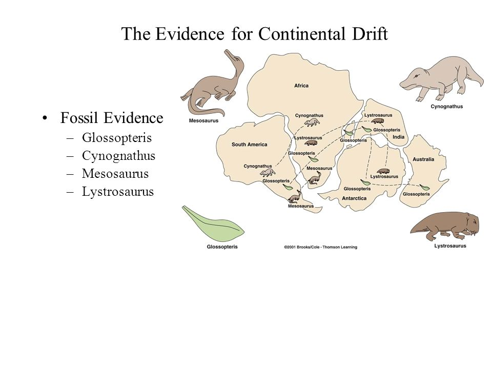 evidence continental drift essay