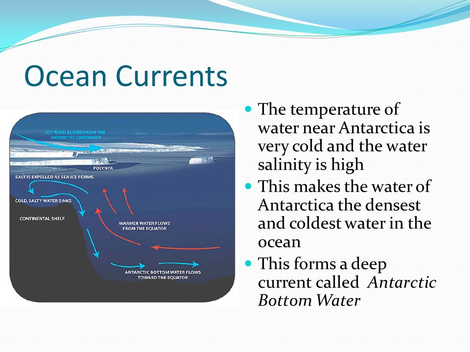 Ocean Currents The temperature of water near Antarctica is very cold and the water salinity is high.