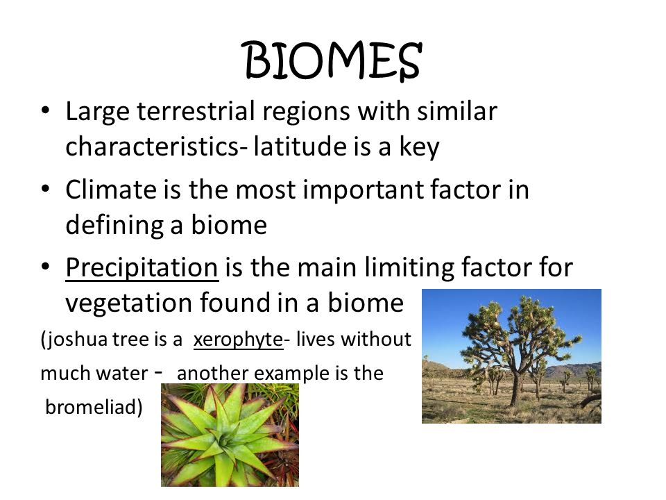 Example Of A Biome Gallery Example Cover Letter For Resume