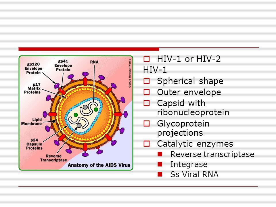 Groß Hiv Virus Anatomie Ideen - Menschliche Anatomie Bilder ...