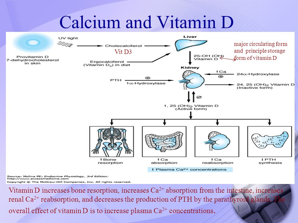 Pharmacology of drugs used in calcium & vitamin D disorders - ppt ...