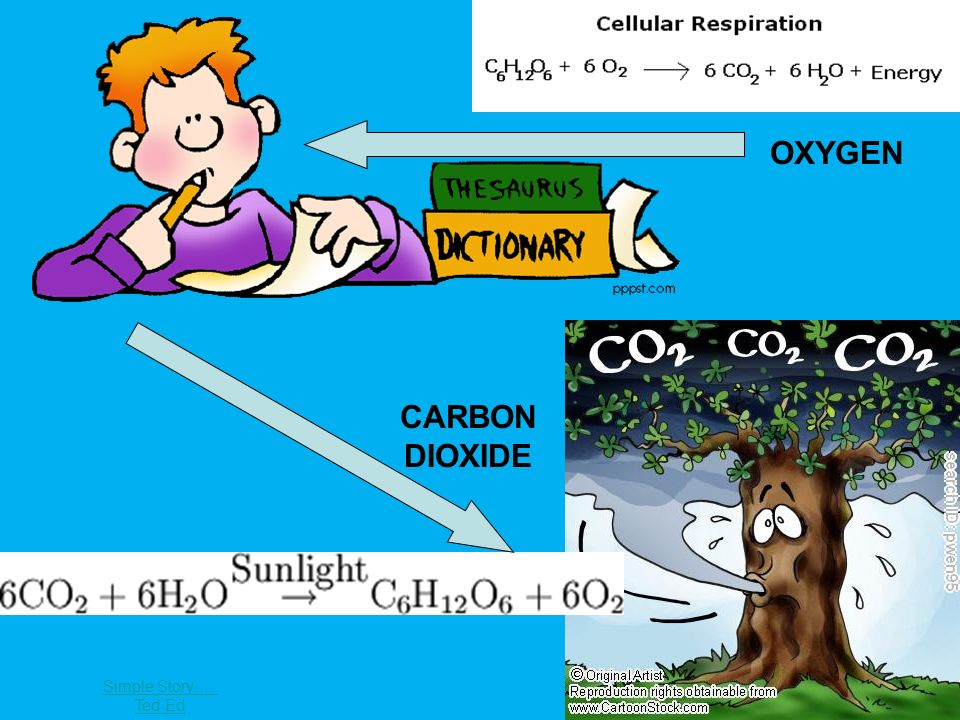 OXYGEN CARBON DIOXIDE Handout of cycle Simple Story….. Ted Ed