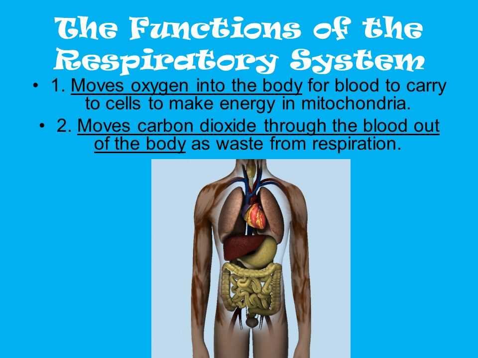 The Functions of the Respiratory System