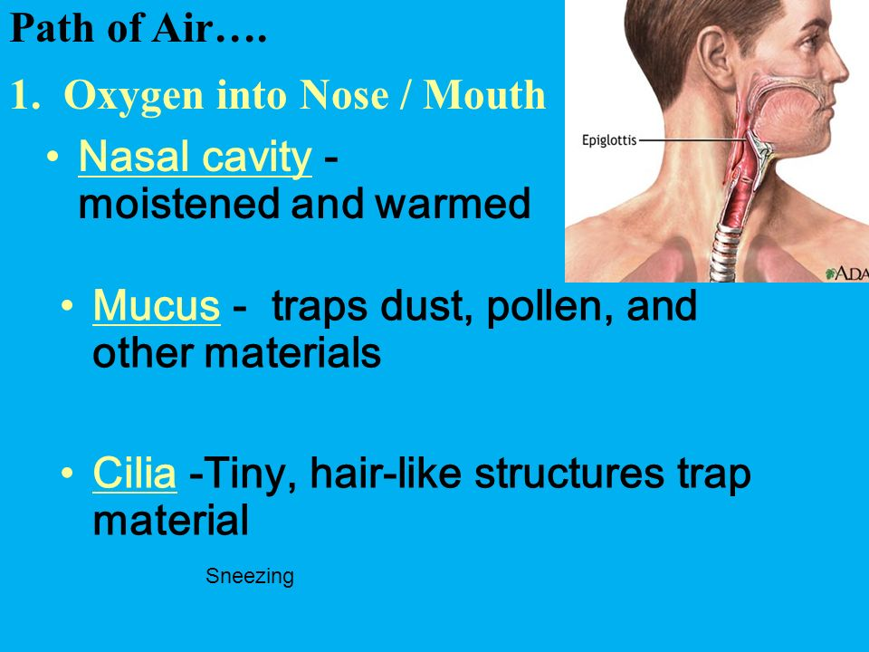 1. Oxygen into Nose / Mouth