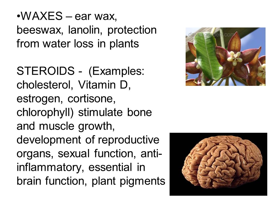 WAXES – ear wax, beeswax, lanolin, protection from water loss in plants STEROIDS - (Examples: cholesterol, Vitamin D, estrogen, cortisone, chlorophyll) stimulate bone and muscle growth, development of reproductive organs, sexual function, anti-inflammatory, essential in brain function, plant pigments