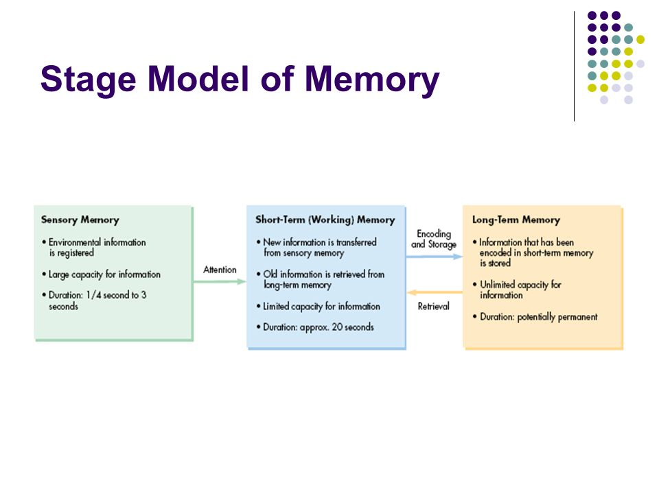 theories and stages of memory His theory identifies four stages a child experience: sensorimotor stage: from birth to 2 years of age during this stage the child is internally motivated to interact physically with her environment, building an understanding of reality and how it works.