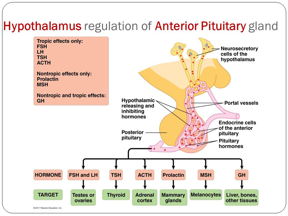 Anatomy & Physiology Review - ppt video online download  Anatomy & Physi...