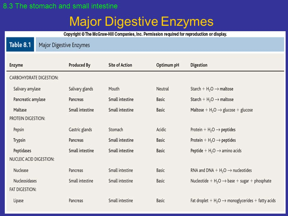 Digestive Enzymes And Functions Table Elcho Table