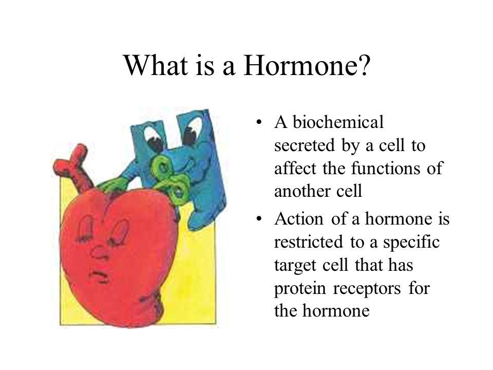 the endocrine system. - ppt video online download, Human Body