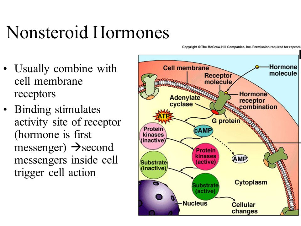 nonsteroid hormones cause