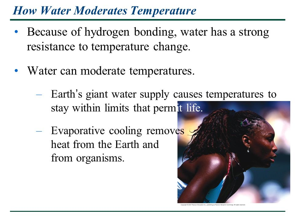 How Water Moderates Temperature