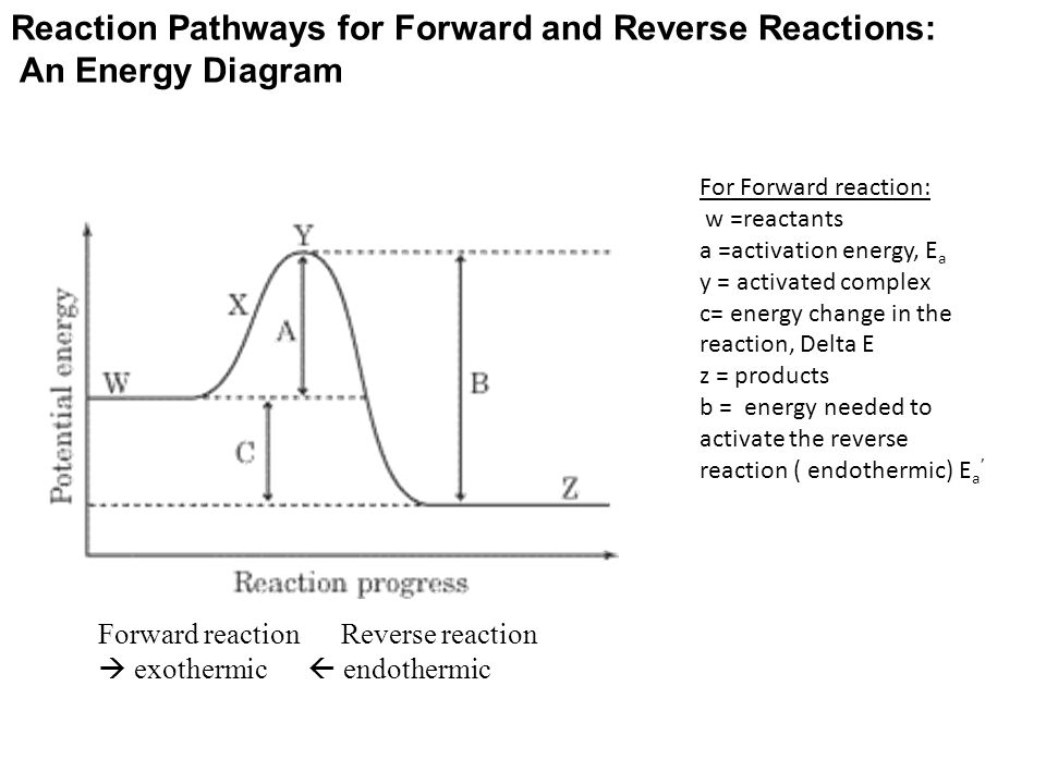 Difference Between Activation Energy And Rate Of Reaction Units