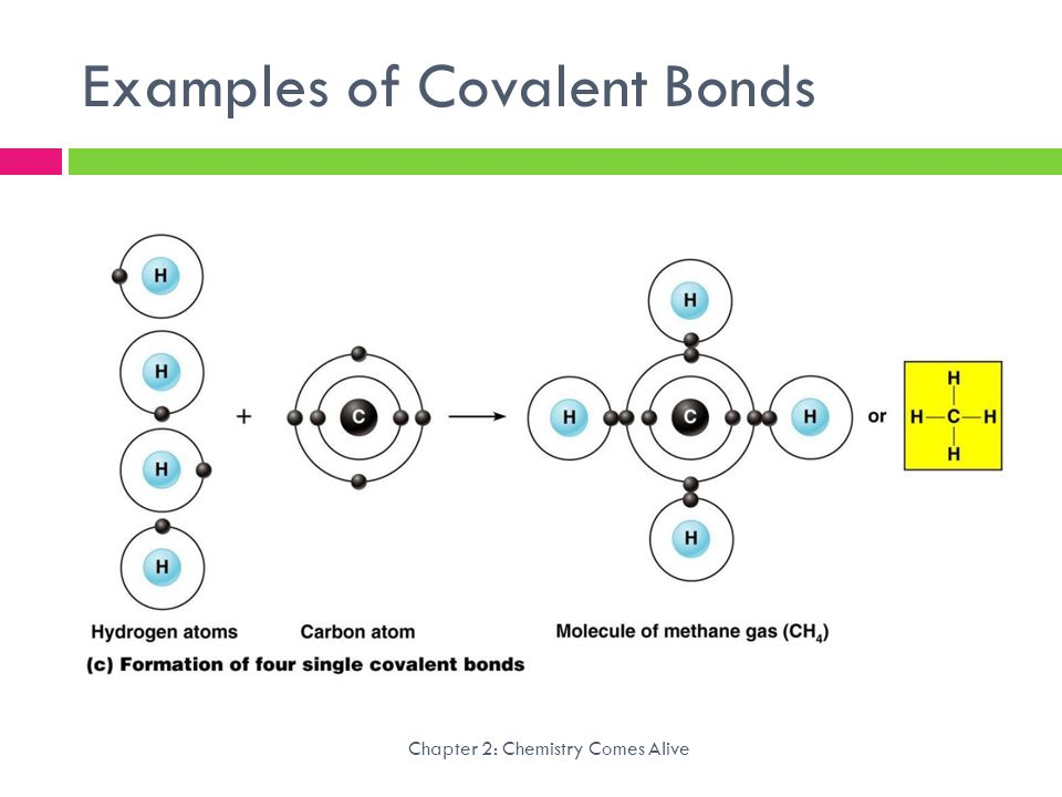 1f7cf05bccd Strength of Polar Covalent Bond www.obfuscata.com · Chemistry Comes Alive  Anatomy   Physiology. - ppt video .
