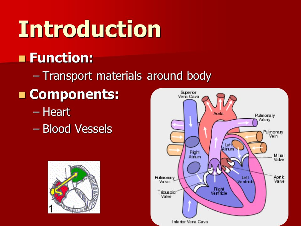components of blood transport Technically, blood is a transport liquid pumped by the heart (or an equivalent structure) blood components in humans, blood is an opaque red fluid.