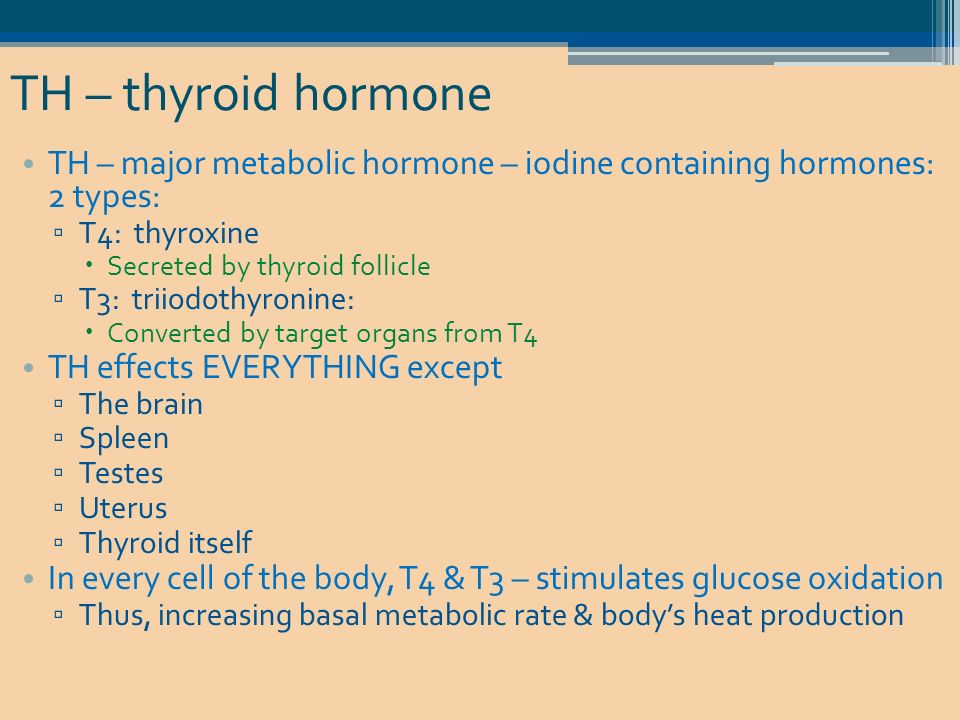 what was the effect of thyroxine on the normal rat s metabolic rate A thyroid blood test and other forms of testing tend to demonstrate the following results that constitute normal thyroid levels s metabolic rate thyroxine.