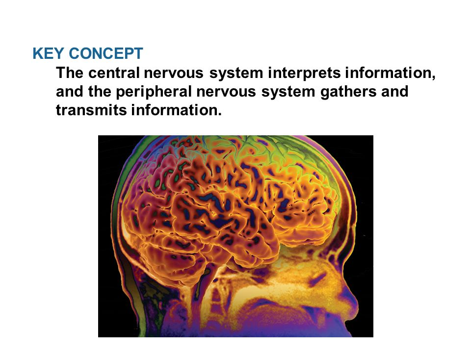 a key concept in information systems Use the internet or the strayer library to research one (1) concept in information systems that you have studied in this course you may select a topic of your choice or you may use one (1.