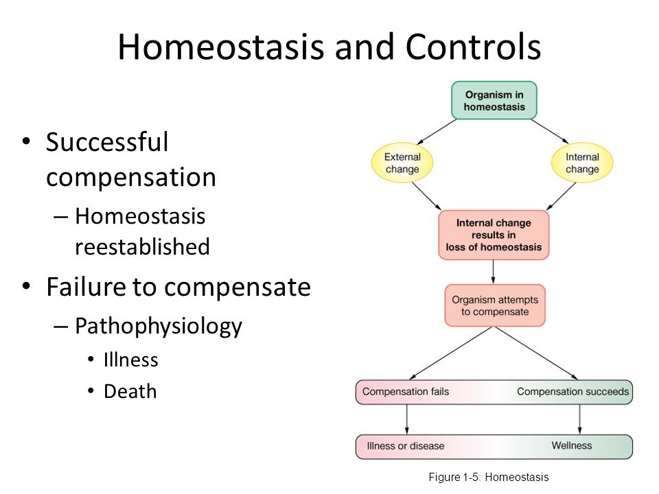 deb homeostasis Definition of homeostasis: disposition of living beings (and inanimate and appropriately designed systems) to keep on functioning at an optimum level.