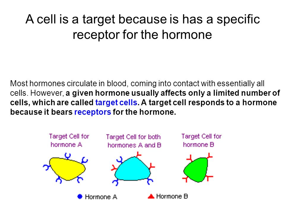 endocrine system and specific target cells System endocrine the actions of hormones on target cells hormones influence target cells by binding to specific receptors.