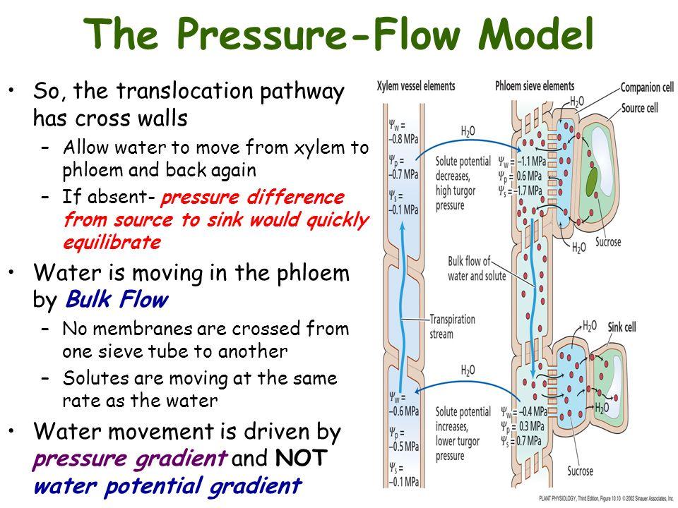 mechanism of phloem transport pdf