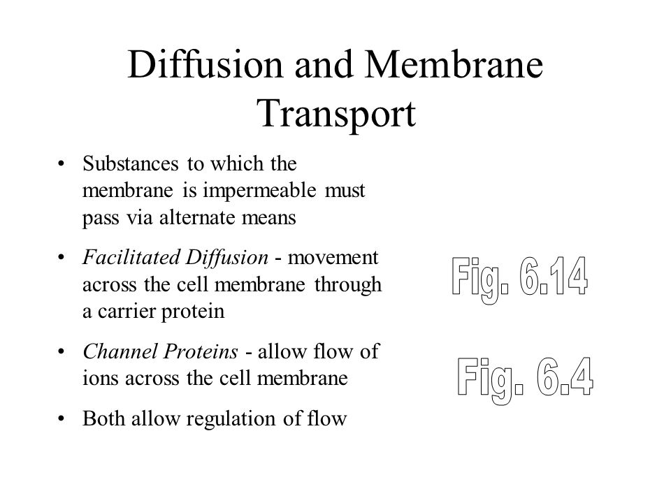 Diffusion and Membrane Transport