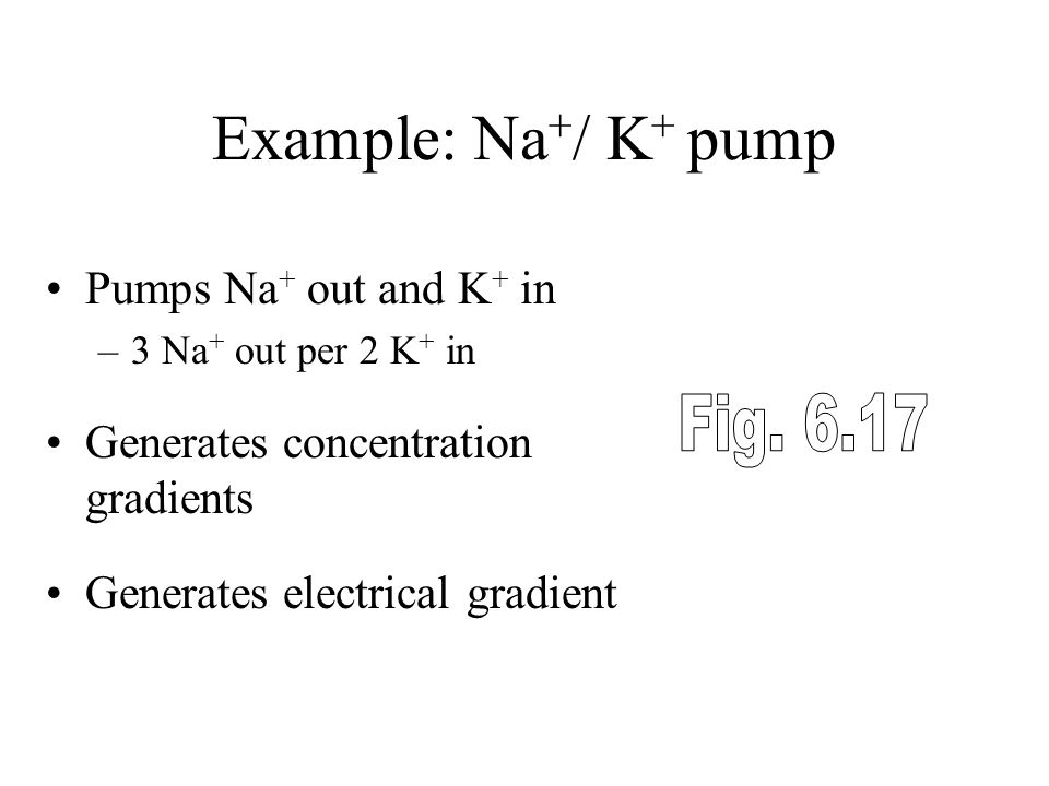 Example: Na+/ K+ pump Fig Pumps Na+ out and K+ in
