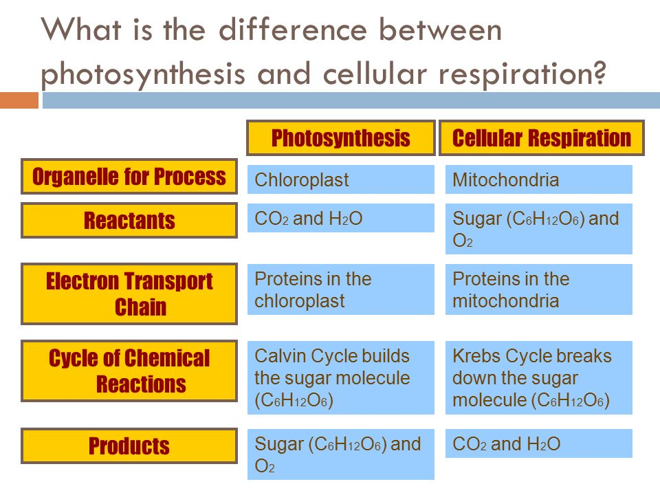 Difference cellular photosynthesis and between respiration
