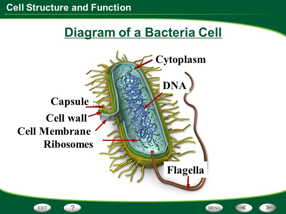 besides D B B C F E E F Ce Ff as well Factory Part A Manager E S Office Found In A Plant Cells Animal Cells additionally Lord Of The Flies Plot Diagram With Images moreover Detailed Neuron Diagram Nerve Cell Anatomy Cross Section Illustration With Organelles Stock Vector. on plant cell diagram parts