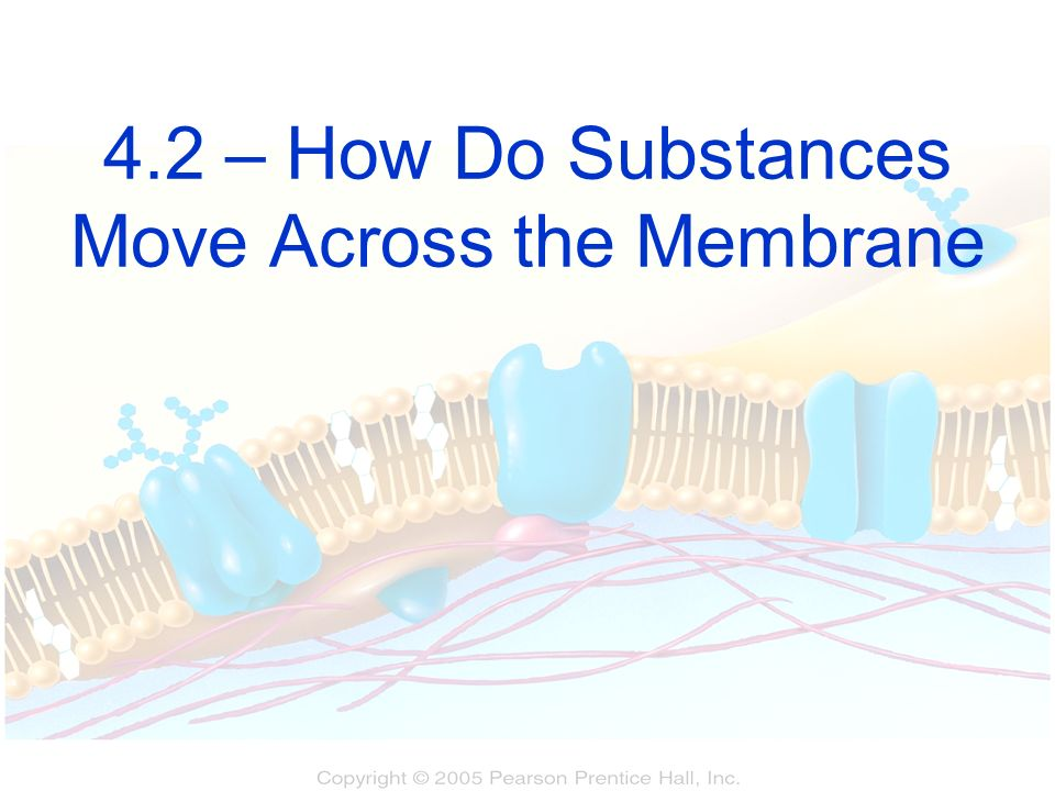 4.2 – How Do Substances Move Across the Membrane