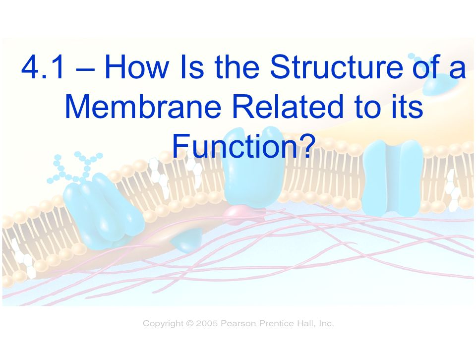 4.1 – How Is the Structure of a Membrane Related to its Function