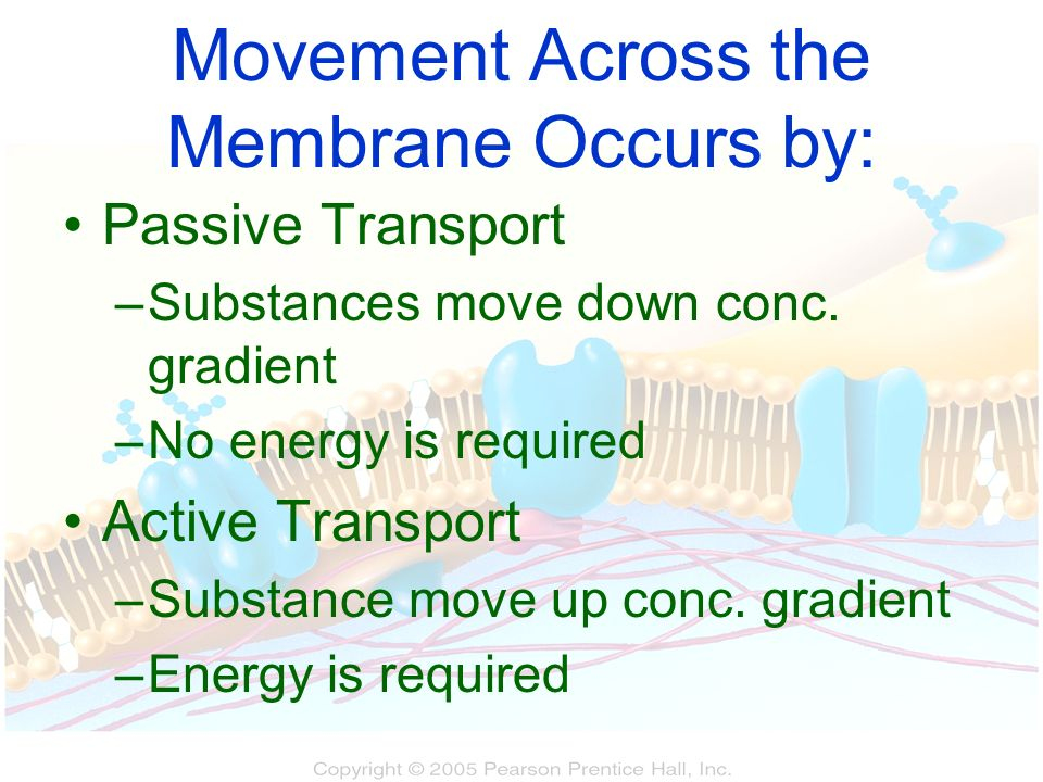 Movement Across the Membrane Occurs by: