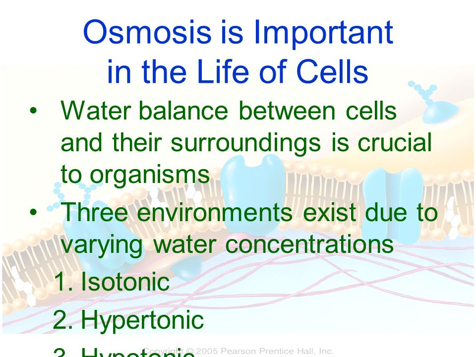 Osmosis is Important in the Life of Cells