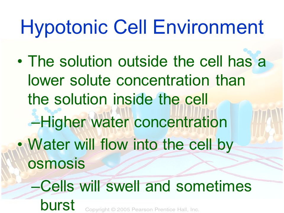 Hypotonic Cell Environment