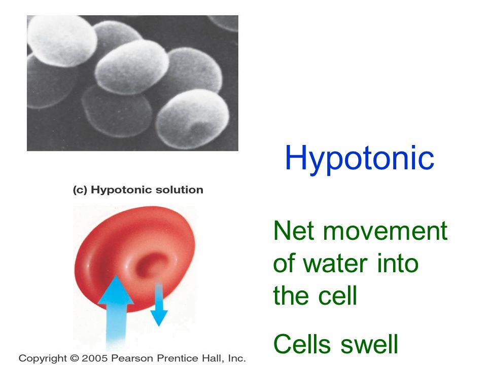 Hypotonic Net movement of water into the cell Cells swell