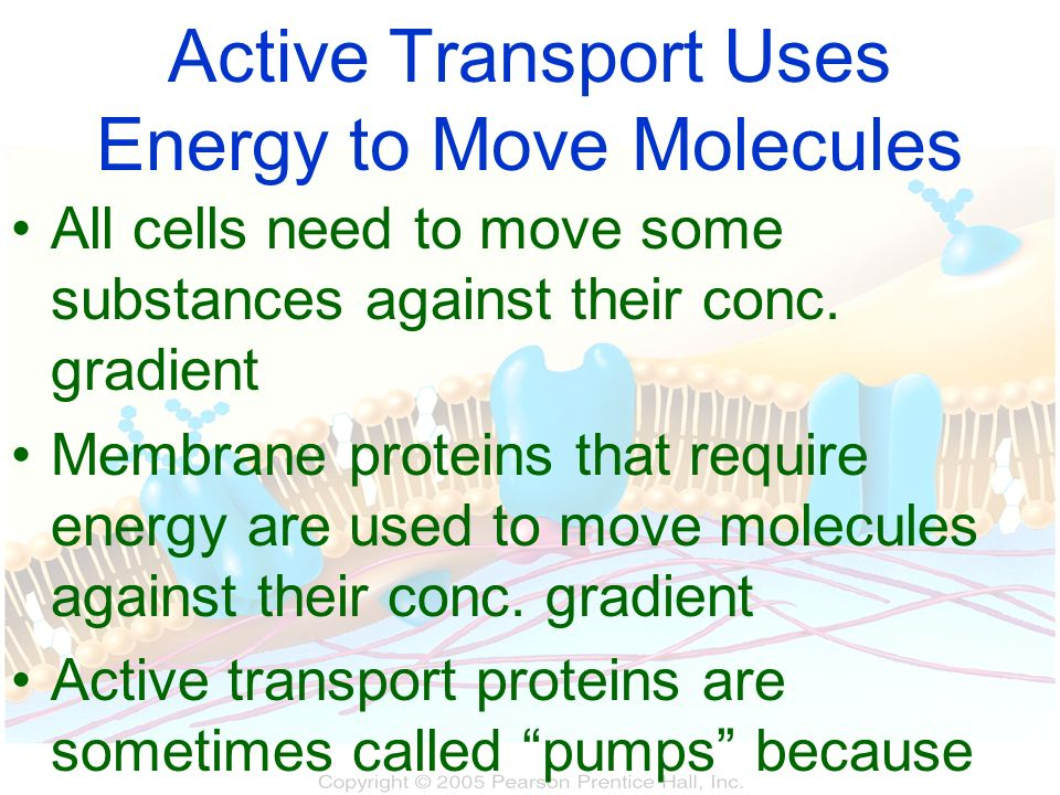Active Transport Uses Energy to Move Molecules