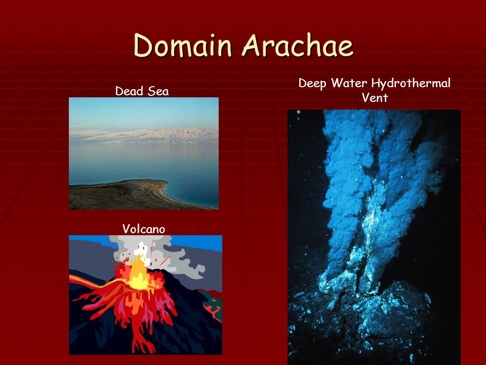 Deep Water Hydrothermal Vent